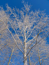 Trees under the hoar-frost Royalty Free Stock Photo