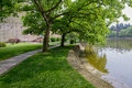 Trees at waterside in sunny spring verdant plants the Stock Images