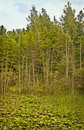 Trees And Wetlands, Northern M...