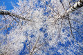 Trees in the winter covered with snow against blue sky Royalty Free Stock Images