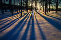 Trees in Winter Royalty Free Stock Photo