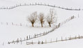 Trees in winter time and fences Stock Photography