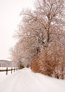 Trees and wooden fence in winter avenue with linden Royalty Free Stock Photos