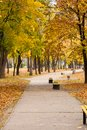 Trees with yellow and green leaves and footpath with benches Royalty Free Stock Photo