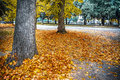 Trees and yellow leaves in a urban square Royalty Free Stock Photo