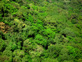 Treetops aerial view Royalty Free Stock Images