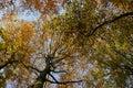 Treetops in autumn Stock Photography
