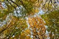 Treetops in autumn Royalty Free Stock Image