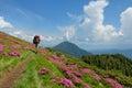 Trekker walking flowers field in mountain on rhododendron Stock Photo