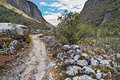 Trekking in the andes mountain lupins below churup cojup valley peru south america Royalty Free Stock Photo