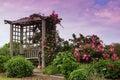 Latková mreža kvitnúce ružový ruže záhrada