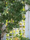 Trellis a white garden at entranceway with tree weaving through it Royalty Free Stock Photos