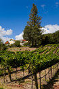 Trenton View Vineyard Royalty Free Stock Photography