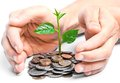 Tres growing on coins hands holding tress csr sustainable development economic growth Royalty Free Stock Photo