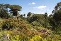 Tresco Abbey Garden, Scilly Isles Royalty Free Stock Photo
