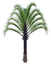 Triangle palm tree dypsis decaryi d render isolated in white background Stock Image