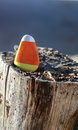 Triangular rock painted to look like candy corn Royalty Free Stock Photo