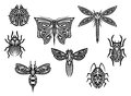 Tribal tattoos set with ornamental elements of insects for design Royalty Free Stock Photos