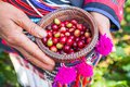 Tribe Akha Agriculturist harvesting arabica coffee berries in or