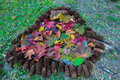 Tribute to autumn fallen leaves surrounded by fir tree cones arranged as a the most colourful of all seasons Stock Photo