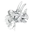 Triceratops Dinosaur Sketch  Vector  Illustration Royalty Free Stock Image