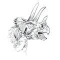 Triceratops Dinosaur Sketch  Vector  Illustration Royalty Free Stock Photo