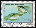 Trichopterus sumatranus, series `Aquarium Fish`, circa 1980 Royalty Free Stock Photo