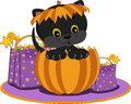 Trick or treat kitten Stock Images