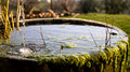 A trickle of water falls into a old round tub of mossy stone. Royalty Free Stock Photo