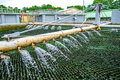 Trickling filter spraying wastewater for treatment at sewage pla plant Royalty Free Stock Image