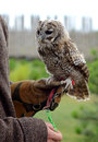 Tricks with eagle-owl Royalty Free Stock Images