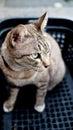 Tricky Cat Royalty Free Stock Photo