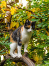 Tricolor calico cat in garden Stock Image