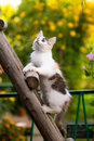 Tricolor kitten Royalty Free Stock Photos