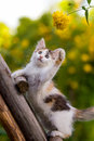 Tricolor kitten Stock Photography