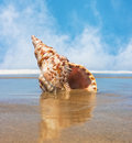 Trident shell a seashell on a beach with flowing water around it and misty fog in the background Royalty Free Stock Images