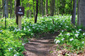 Trillium Lined Hiking Trail Royalty Free Stock Images