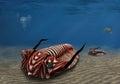 Trilobite Royalty Free Stock Photo