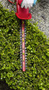 Trimming top of Hedges with Hedger Tool Royalty Free Stock Photography