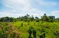 Trinidad Landscape