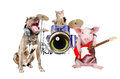 Trio of animal musicians Royalty Free Stock Photo