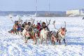 Trip on reindeers nadym russia march people ride deer during the holiday day of the reindeer breeder day of the reindeer breeder a Stock Photo