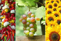 Triple thanksgiving rose grape sunflowers mediterranean vegetable braid Royalty Free Stock Images