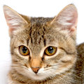 Trnquil kitten. Stock Photo