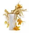 Trockene Blumen Lizenzfreies Stockfoto