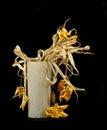Trocknen Sie Blumen Stockfoto