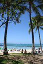 Troical Palms Waikiki Beach Royalty Free Stock Images