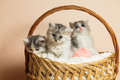 Trois chatons gris Photo stock