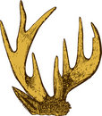 Trophy of antlers . Stock Photography