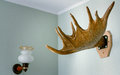 Trophy of the hunter - a horn of an elk. It is presented as an i Royalty Free Stock Photo